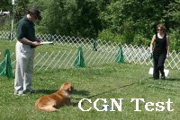 CGN Test