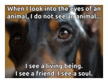 Our Core Values are seen in the eyes of animals!