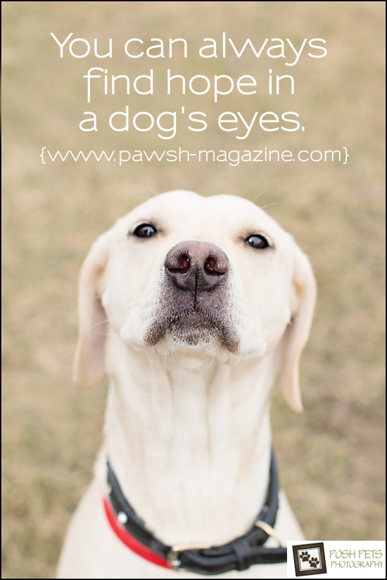 Pet Poster of the Day